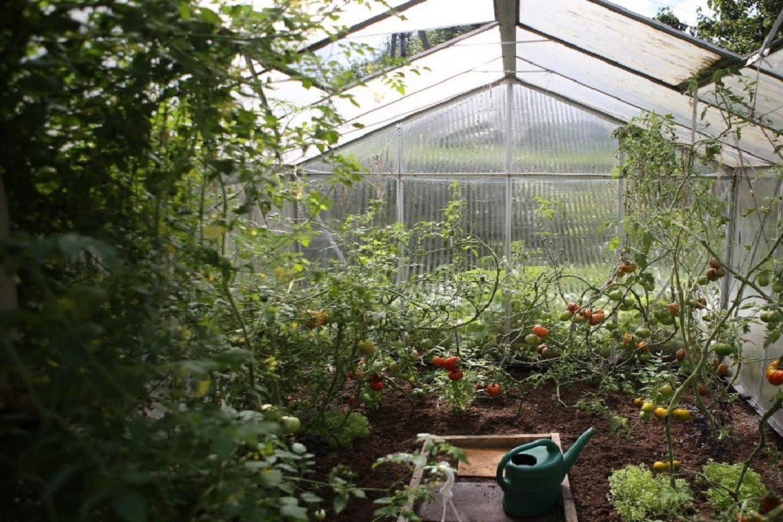 agriculture-de-proximité-redimensionnée-1